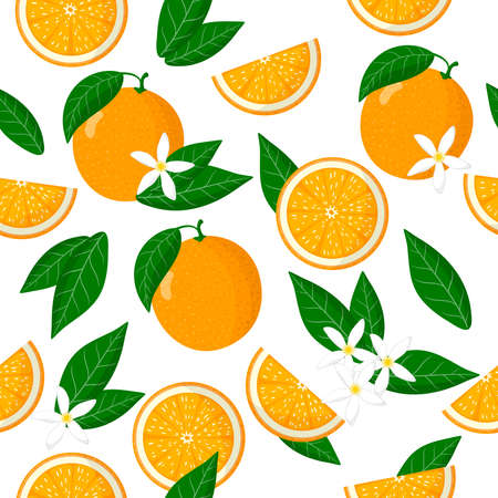 Vector cartoon seamless pattern with Citrus sinensis or Orange exotic fruits, flowers and leafs on white background for web, print, cloth texture or wallpaper 矢量图像