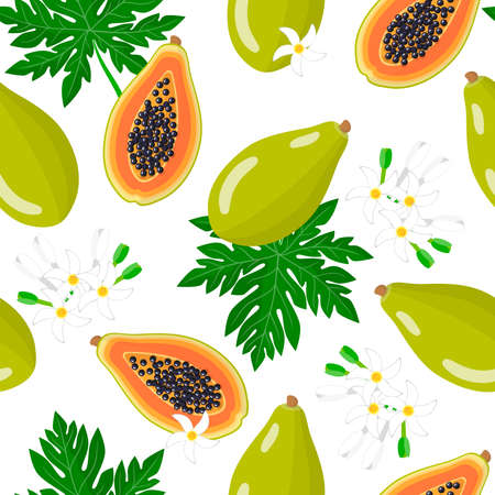 Vector cartoon seamless pattern with Carica papaya or Melon tree exotic fruits, flowers and leafs on white background for web, print, cloth texture or wallpaper
