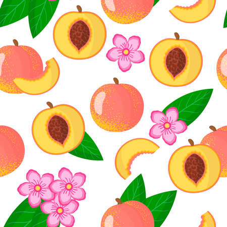 Vector cartoon seamless pattern with Prunus persica or Peach exotic fruits, flowers and leafs on white background for web, print, cloth texture or wallpaper Иллюстрация