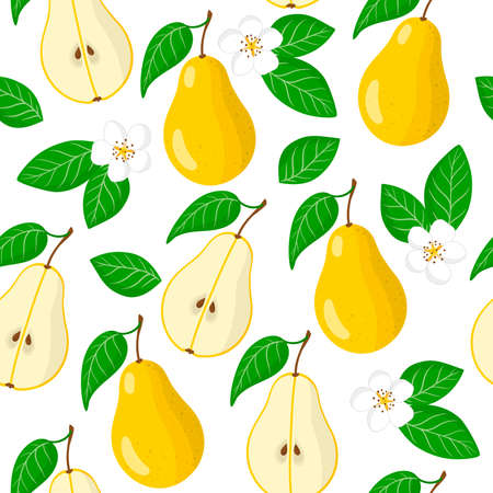 Vector cartoon seamless pattern with Pyrus or Pear exotic fruits, flowers and leafs on white background for web, print, cloth texture or wallpaper