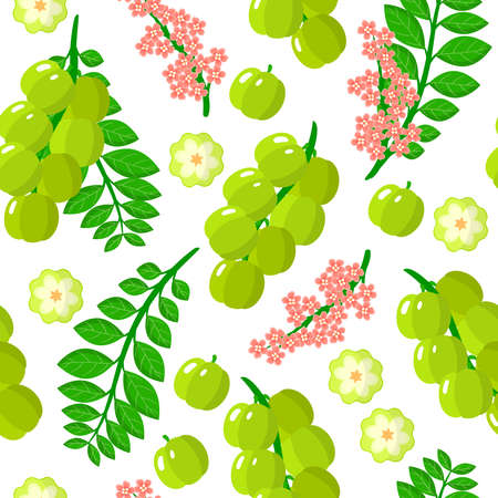 Vector cartoon seamless pattern with Phyllanthus acidus or Antilles Gooseberry exotic fruits, flowers and leafs on white background for web, print, cloth texture or wallpaper