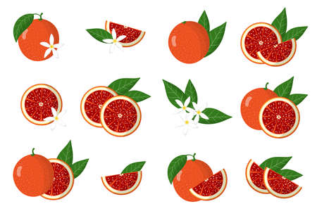 Set of illustrations with blood orange exotic citrus fruits, flowers and leaves isolated on a white background. Isolated vector icons set.