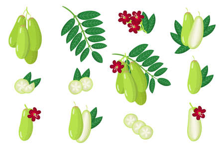 Set of illustrations with Bilimbi exotic fruits, flowers and leaves isolated on a white background. Isolated vector icons set.