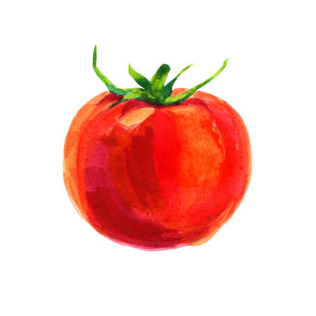 Watercolor tomato isolated on white background photo