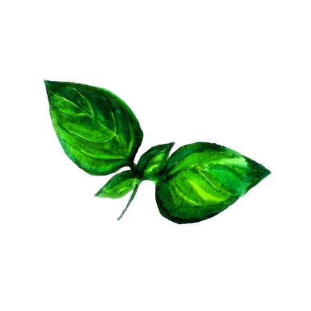흰 배경에 고립 수채화 향미료
