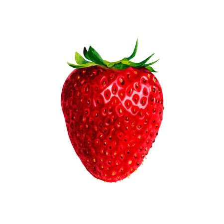 흰색 배경 벡터에 고립 된 현실적인 수채화 그림 과일 벡터 일러스트