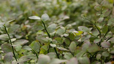 color photographs: green grass