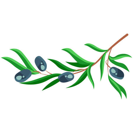 Picture of a branch of olives on a white background.