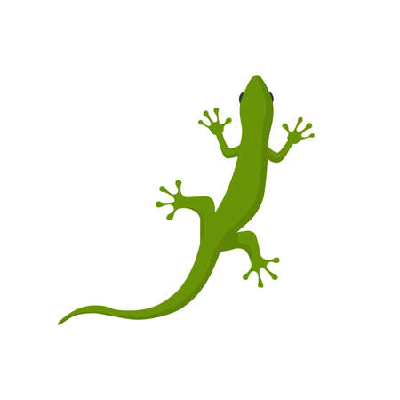 Picture of a lizard on a white background. Vectores