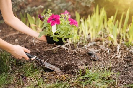 A young woman planting flowers in the garden. Stock Photo