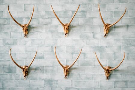 Decorated and carved gold animal skulls on the wall.