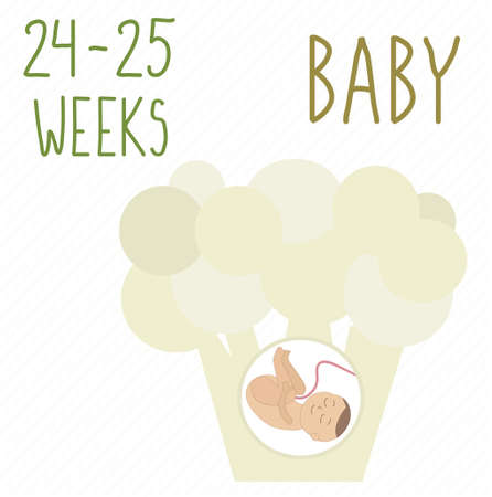 Cauliflower. pregnancy development, size of embryo for 24-25 weeks. compare with fruits. Human fetus inside the womb 6 months. Vector illustrations on striped background Vektorové ilustrace