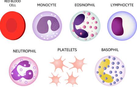 Blood cells. Set of colored cells. Red blood cells, platelets, leukocytes, lymphocytes, eosinophils, neutrophils, basophils, monocytesInfographics Vector illustration on isolated background