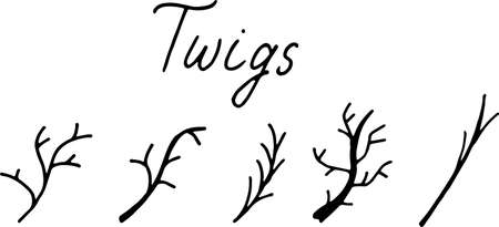 simple doodles twigs. dry old branches. Best for wedding design. Vector illustration isolated on white background.