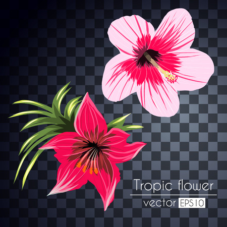 Beautiful set tropical flowers bouquet isolated on a transparent background