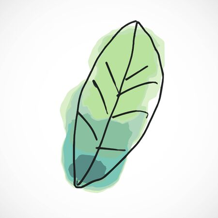 Green leaf hand drawn watercolor style fruit set paint ink sketch illustration simple art paint easy to change colors vector
