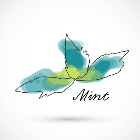 Mint hand drawn watercolor style fruit set paint ink sketch illustration simple art paint easy to change colors vector