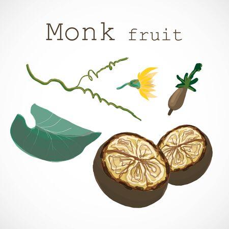 Monk fruit siraitia herb plant vector illustration 向量圖像