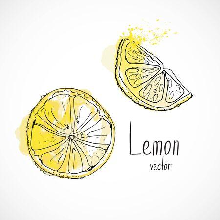 Lemon watercolor ink sketch food hand drawn vector ingredient recipes for menu