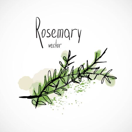 Rosemary watercolor ink sketch food hand drawn vector ingredient recipes for menu