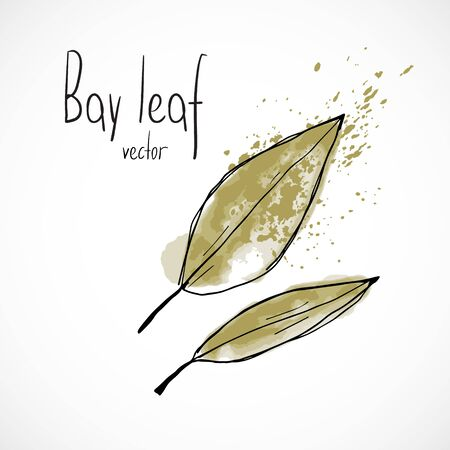 Bay leaf watercolor ink sketch food hand drawn vector ingredient recipes for menu
