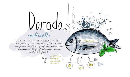 Fish dorado hand drawn set watercolor ink, food vitamin menu restaurant, sketch cartoon vector illustration, text collage