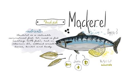 Fish mackerel hand drawn set watercolor ink, food vitamin menu restaurant, sketch cartoon vector illustration, text collage