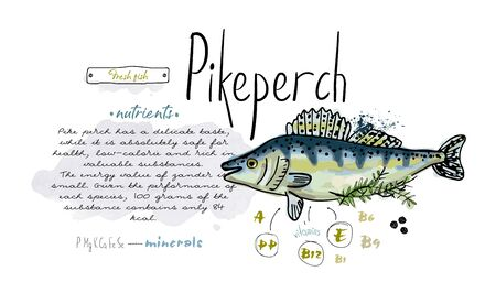 Fish ikeperch hand drawn set watercolor ink, food vitamin menu restaurant, sketch cartoon vector illustration, text collage