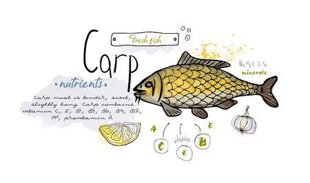 Fish carp hand drawn set watercolor ink, food vitamin menu restaurant, sketch cartoon vector illustration, text collage