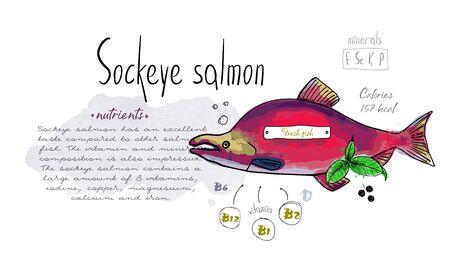 Fish sockeye salmon hand drawn set watercolor ink, food vitamin menu restaurant, sketch cartoon vector illustration, text collage