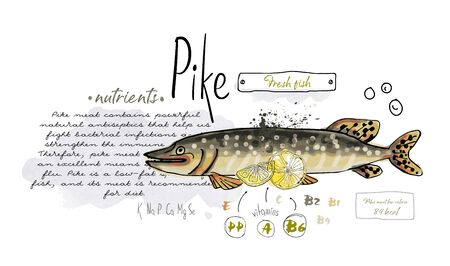 Fish pike hand drawn set watercolor ink, food vitamin menu restaurant, sketch cartoon vector illustration, text collage
