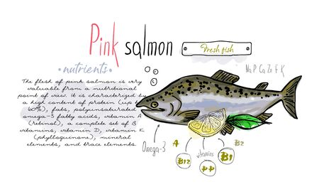 Fish pink salmon hand drawn set watercolor ink, food vitamin menu restaurant, sketch cartoon vector illustration, text collage