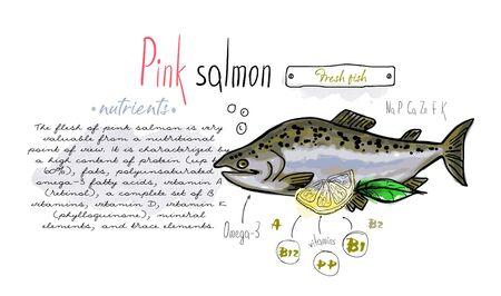Fish pink salmon hand drawn set watercolor ink, food vitamin menu restaurant, sketch cartoon vector illustration, text collage Banco de Imagens - 136424027