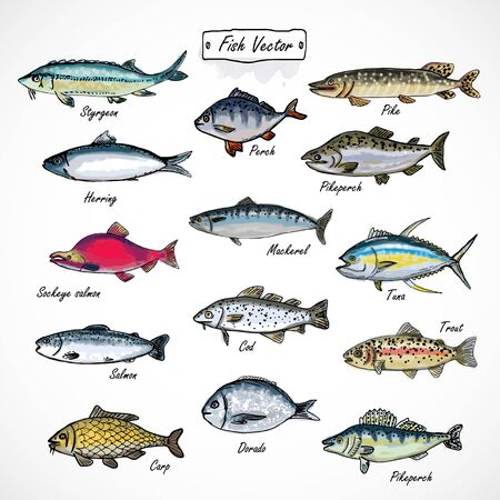 Set fish seafood watercolor hand drawn isolated on white background