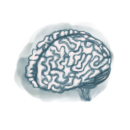 Brain watercolor style illustration medical science drawing