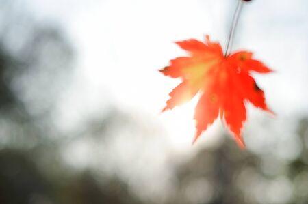 autumn leaves against the sky and sun