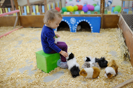 The little girl in a zoo feeds guinea pigs Imagens