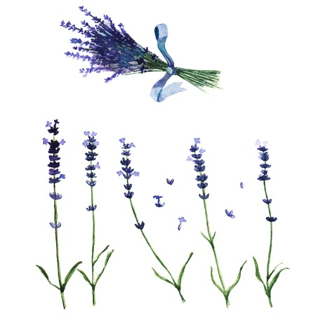 Illustration with watercolor lavender