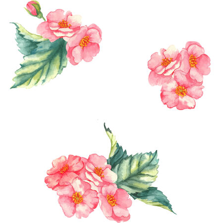 eglantine: Watercolor  illustration with little tender bouquets with pink brier flowers on the white background