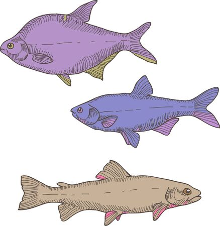 brown trout: Vector illustration with three different  colorful blue, brown, violet fishes. Carp, trout and bream
