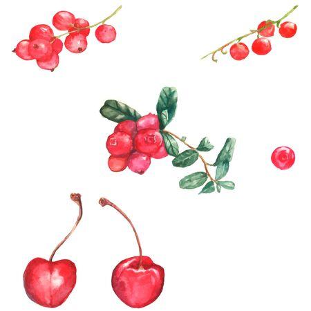 レッドカラント: 白い背景の異なる果実と水彩イラスト: チェリー、クランベリー、赤スグリ
