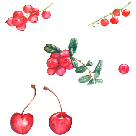 Watercolor illustration with different berries on the white background: cherry, cranberries, red currant
