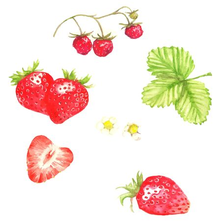 Watercolor illustration  with different berries on the white background: strawberries and flowers and leaves