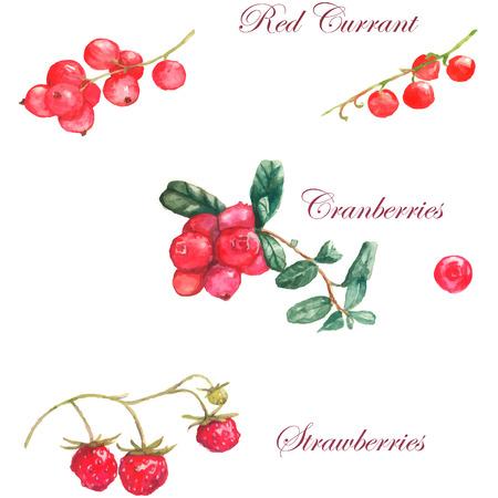 白い背景の上の別の果実と水彩イラスト: チェリー、クランベリー、いちご