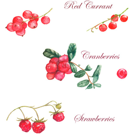 Watercolor  illustration with different berries on the white background: cherry, cranberries, strawberries