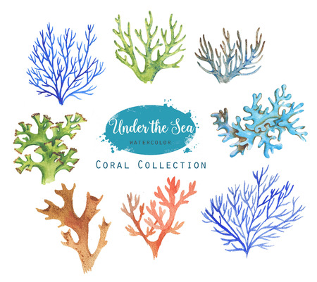 Hand-drawn watercolor illustration of the under the sea. Coral collection