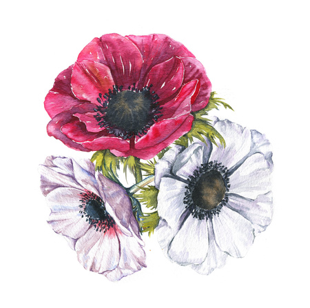 Hand-drawn watercolor illustration of the floral bouquet. Tender spring drawing of pink and white anemones flowers  in the composition