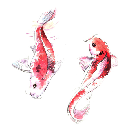 Hand-drawn watercolor illustration of couple of red Koi carps fishes in the water. Japanese style drawing on the white background