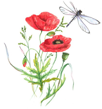 Hand-drawn watercolor illustration of the red summer poppy flower and the dragonfly. Isolated floral drawing of the summer meadow flowers on the white background