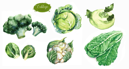 Hand-drawn watercolor food illustrations. Isolated drawings of the fresh vegetables - cabbage, cauliflower, brussels sprouts, kohlrabi, romaine lettuce leaves and broccoli